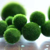 HOT BIG MARIMO MOSS BALLS Green Plant Grass Home Aquariums Fish Water Tank Decor