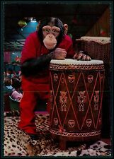 Africa Drum music Dressed Circus Chimpanzee Monkey Fantasy old 1950s postcard
