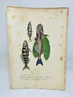 Fish Plate 65 Lacepede 1832 Hand Colored Natural History