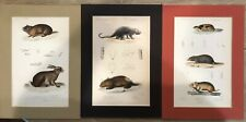 Antique c.1836 Cuvier Hand-Colored Scientific Engravings (Three) Various Animals