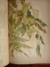 FLEURS PLANTES ET FRUITS CIRCA 1900 ILLUSTRE FRAIPONT