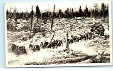 Logging Loggers in 1895 Team of Horses pulling Logs RPPC Real Photo Postcard B96