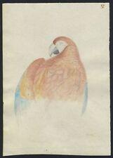 Group of Original Bird Drawings