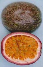 Passiflora Don's Choice 10 seeds