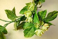 Artificial Silk Garland of Green Hops, 2 m Long