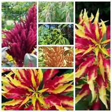 100 Amaranth Flower Seeds Amaranthus Rare 15 Kinds Beautiful Garden Home Plants