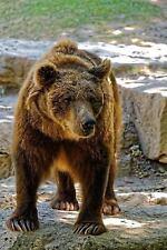 A Brown Bear Walking Journal : Take Notes, Write down Memories in This 150...