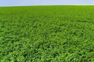 NON-GMO VERNAL ALFALFA SEED - Garden Cover Crop, Wildlife Food plot, Field Grown