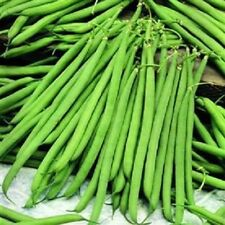 Vegetable - Dwarf French Bean Nautica  50 seeds