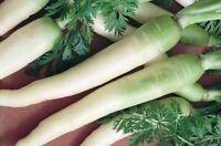 500+ certified organic LUNAR WHITE carrot seeds