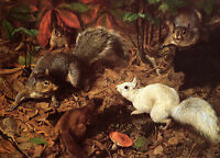 SQUIRRELS WHITE SQUIRREL FOREST ANIMAL PAINTING BY BEARD ON CANVAS REPRO SMALL