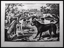 JAGDHUNDE Deerhound, Bluthund, etc. JAGD. Originale Lithographie 1870