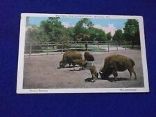 Postcard ~ Buffalo ~ Washington Park Zoological Garden ~ Milwaukee WI ~ USED