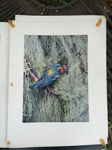 Rare 1953 Eliot Porter Photograph Print Northern Parula Warbler From Portfolio