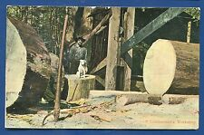 A Lumberman's Workshop with dog in California Timber old postcard