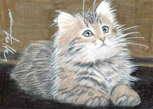 ACEO original pastel drawing maine coon kitten cat  by Anna Hoff