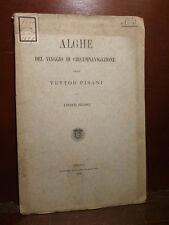 Piccone : Alghe del Viaggio di Circumnavigazione della Vettor Pisani Genova 1886