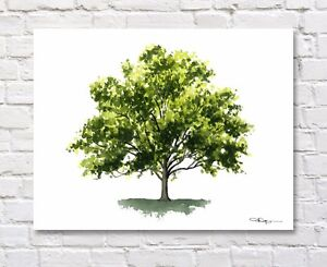 Sycamore Tree Art Print 11 x 14 Watercolor Painting by Artist DJR