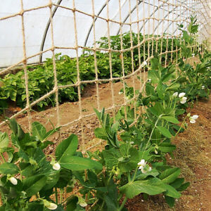 Compostable Jute Climbing Plant Support Garden Netting Clematis Pea Bean 50mm