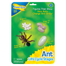 Ant Life Cycle Stages