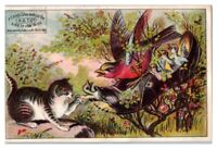 Bird's Nest in Old Shoe w/ Cat, A.S.T. Co. Black Tip Shoes Victorian Trade Card