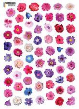 Aufkleber Sticker Wandsticker Wandaufkleber Blumen Lila Lily Fenster Geschirr WC
