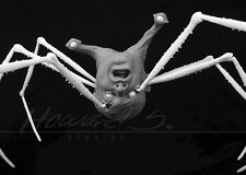 *1:1 SPIDERHEAD 'THE THING' BUST/ JOHN CARPENTER RARE PROP/ RESIN KIT BOTTIN FX*