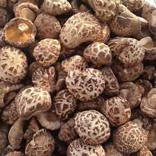 Magic Shiitake Mushrooms Kit Seeds Spawn Spores Substrate Kitchen Wooden 4-6CM