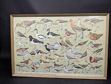 RSPB Chart No 7 Shore Birds & Waders Print & Framed VRAH722004