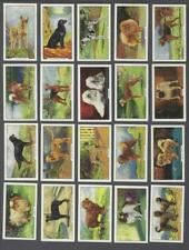 1938 Gallaher Dogs Tobacco Cards Complete Set of 48