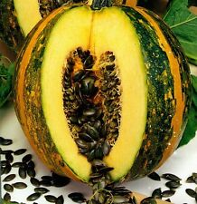 Seeds Pumpkin Golosemjanaja Giant Vegetable Organic Heirloom Russian Ukraine