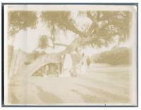 Sénégal, Dakar, L'Arbre du Conseil Vintage citrate print.  Tirage citrate