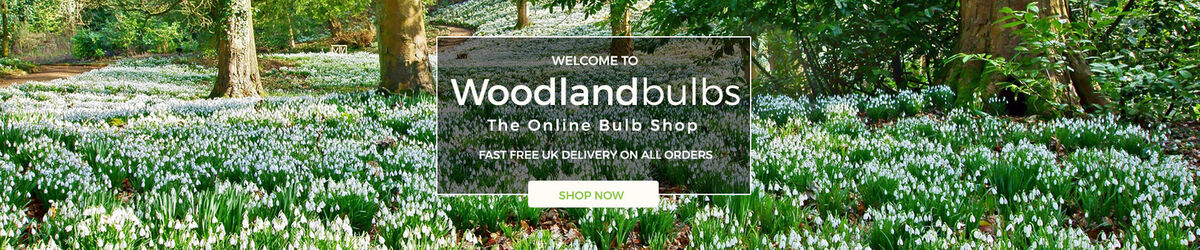 The Woodland Bulb Company