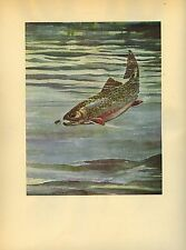1937 Vintage Schaldach Fish Color Art Print Old Squaretail Brook Trout