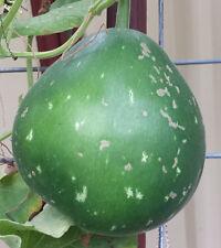 Round Asian Gourd, Calabash, Lauki (Laau, Dudhi, Sorakaaya, Suraikkaai) -5 Seeds