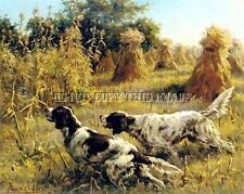 Antique Hunting 8X10 Osthaus Photograph Print 2 Pair Of English Setters On Point