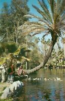 Vintage Picture Postcard LOS ANGELES State & County Arboretum ARCADIA CA