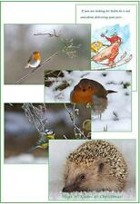 Wildlife Hospital Charity Xmas Cards - Xmas Mix - Birds & Hedgehog – pack of 10