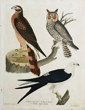 "ORIGINAL Hand Colored Engraving  ""American Ornithology"" Alexander Wilson"