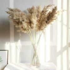 15pack Natural Dried Pampas Grass Reed Flower Bunch Wedding Bouquet Decors Us
