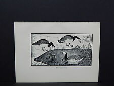 BIRDS, ERIC FITCH DAGLISH, Engraving, c. 1948 Barnacle Geese #36