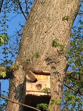 Squirrel House.3=LG.fire hardened wood.Lasts 2-5 yrs longer.Holley.MADE IN U.S.A