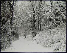 Glass Magic Lantern Slide SNOW COVERED PATH C1890 PHOTO NATURE STUDY TREES