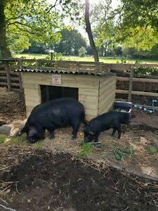 Pig Arks, Huts,