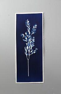 Cyanotype Botanicals original print on watercolor paper original photo minimal