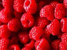 PHOTOGRAPHY FOOD FRUIT RASPBERRY RED JUICY ART POSTER PRINT PICTURE CC6723