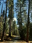 Modoc County CALIFORNIA -TREES EVERYWHERE Owner financing Bidding begins $ 6999  <br/> NO RESERVE, ZERO DOWN, ZERO INTEREST. $ 299/month.