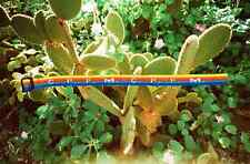"Cactus Plant Flea Market C . P .F . M . / ""CACTUS PLANT "" I.D. BRACELET Rainbow"