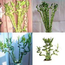 Bonsai Seeds Exotic Garden Novel Plants Absorption Semievergreen Tropical Flower