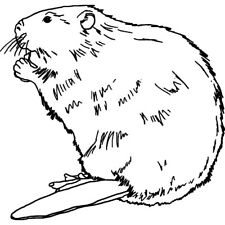 'Beaver' Rubber Stamp (RS027713)